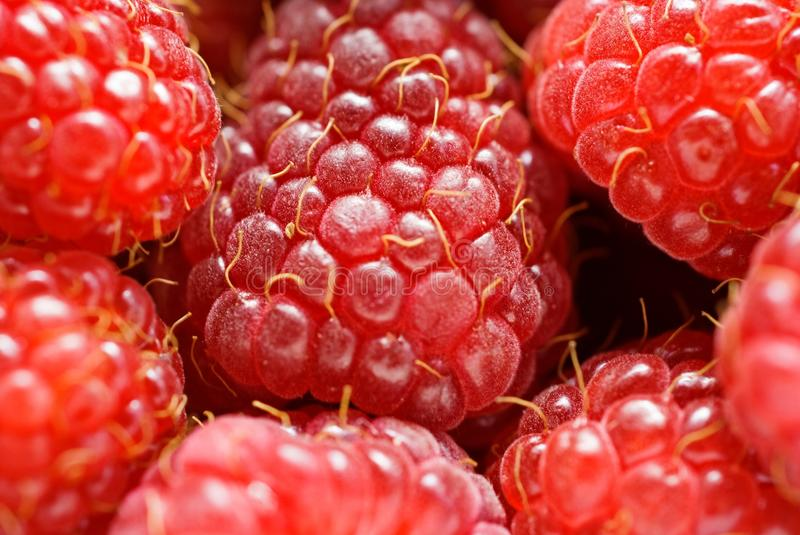 Download Fresh raspberry stock photo. Image of eating, desert - 11829152