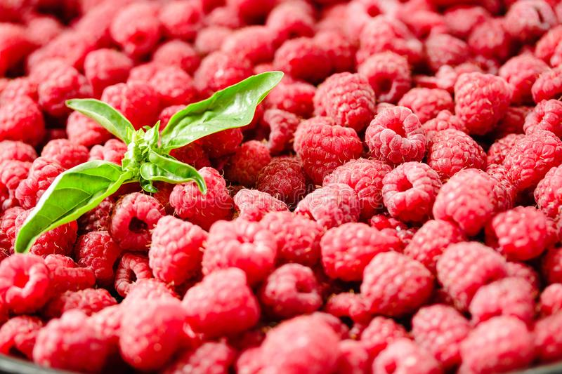 Fresh raspberry and basil background closeup photo.Top view..Detox diet food and raw vegan concept. stock photography