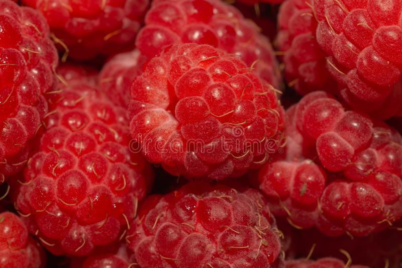 Fresh raspberry close up. ripe raspberries. red berry background stock photos