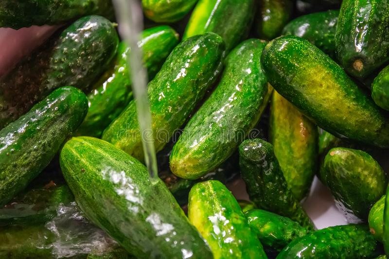 Fresh raw cucumbers in the kitchen sink under running water, washing vegetables and healthy eating royalty free stock photos