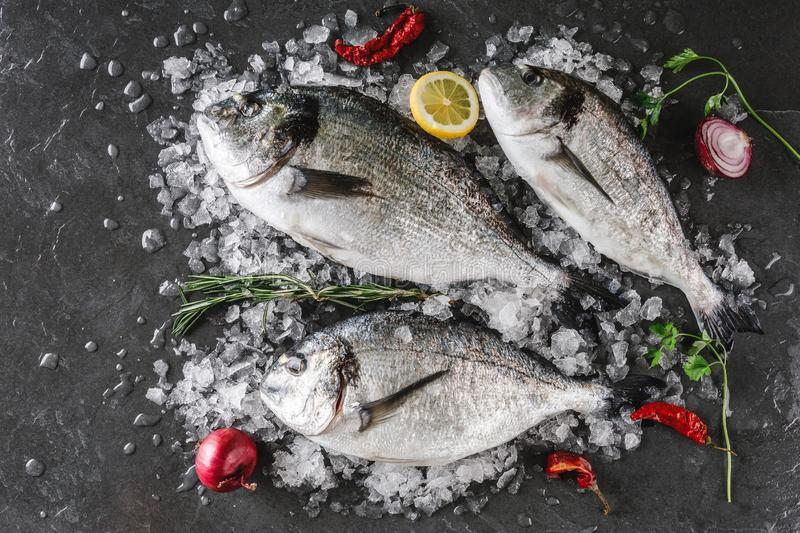Fresh raw dorado fishes with spices, lemon, pepper, rosemary on ice over dark stone background. Creative layout made of fish, top view, flat lay royalty free stock images