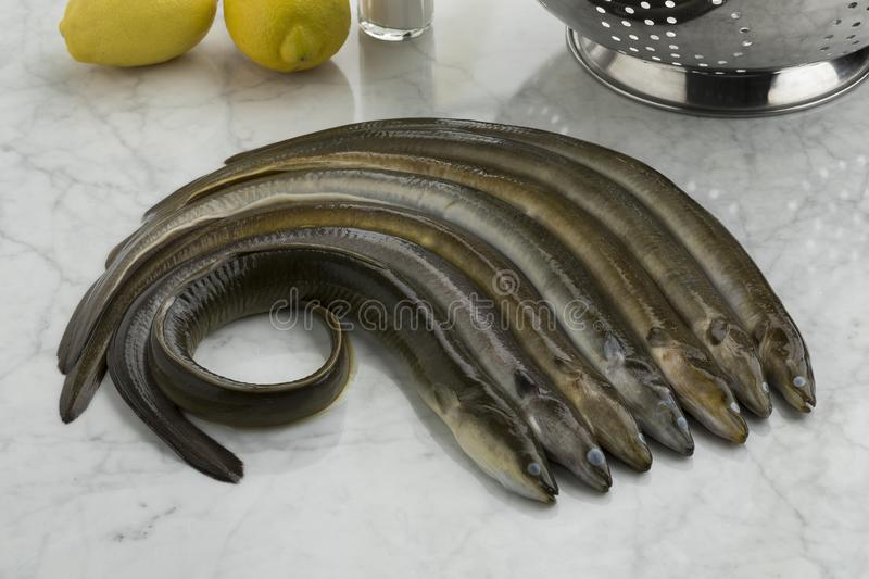 Fresh raw eels in the kitchen. Ready to cook stock photos