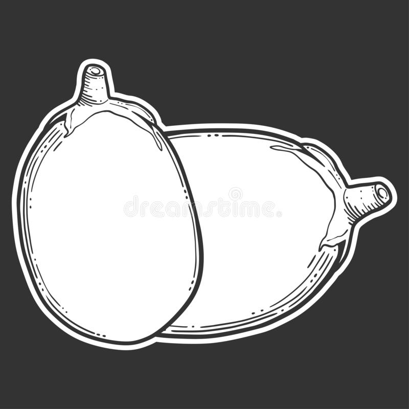 Fresh raw eggplant. Vector concept in doodle and sketch style. Hand drawn illustration for printing on T-shirts, postcards. Icon and logo idea, white royalty free stock photography