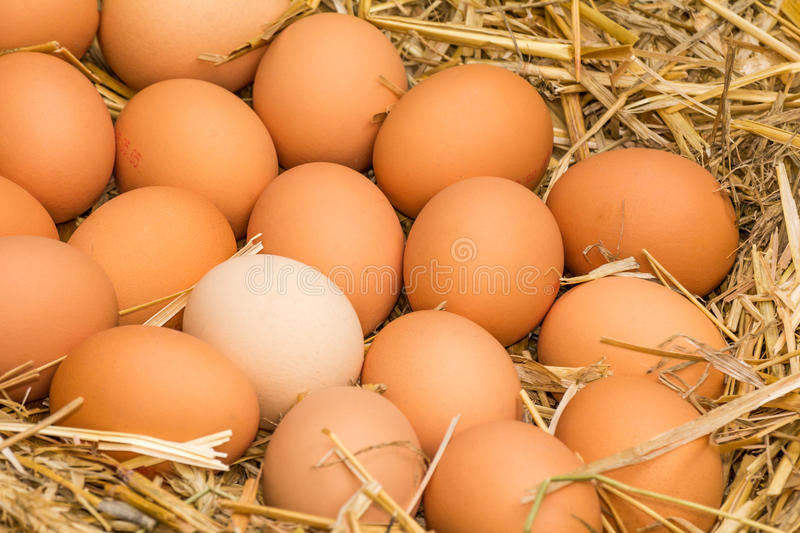 Fresh raw eggs. Freerange fresh raw eggs in recycled paper egg cartons or on the straw royalty free stock photos