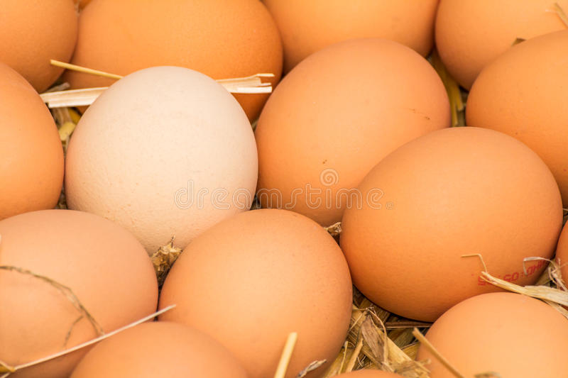 Fresh raw eggs. Freerange fresh raw eggs in recycled paper egg cartons or on the straw royalty free stock images