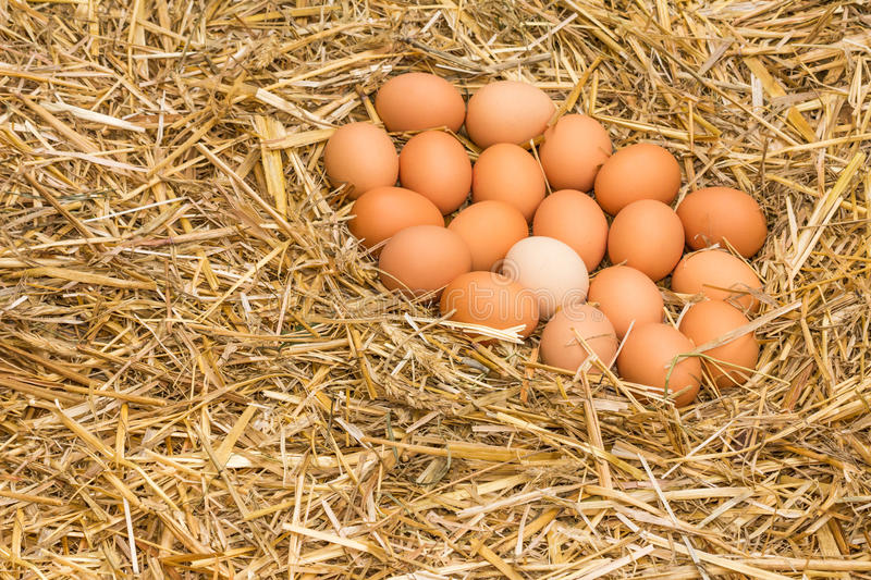 Fresh raw eggs. Freerange fresh raw eggs in recycled paper egg cartons or on the straw stock images
