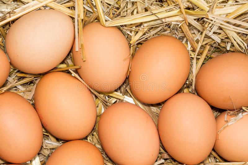 Fresh raw eggs. Freerange fresh raw eggs in recycled paper egg cartons or on the straw stock photos