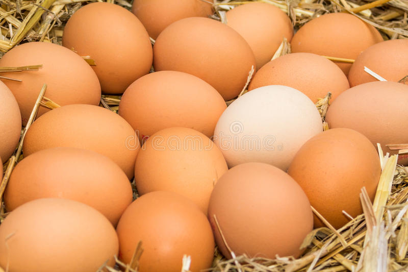 Fresh raw eggs. Freerange fresh raw eggs in recycled paper egg cartons or on the straw royalty free stock photo