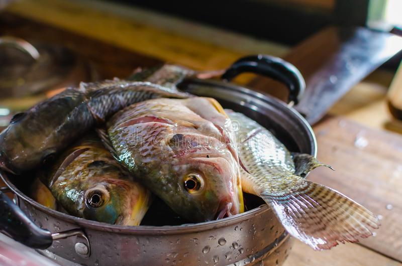 Fresh raw fish in a cooking pot ready for cooking in a domestic royalty free stock images