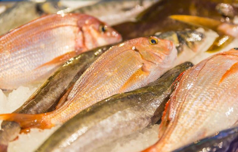 Fresh raw fish on ice. Fresh fish on ice at the fishmarket, Greece Skiathos, September 2018 royalty free stock photos