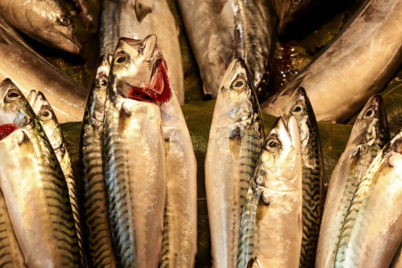 Freah fish in the store. Fresh raw fish mackerel in the store stock images