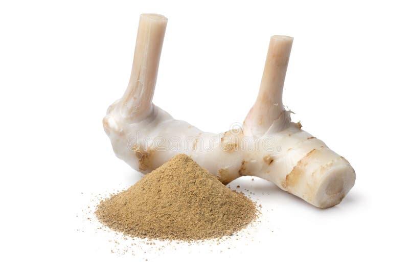 Fresh raw galangal rhizome and ground powder. Fresh raw galangal rhizome and a heap of dried ground powder isolated on white background stock photos