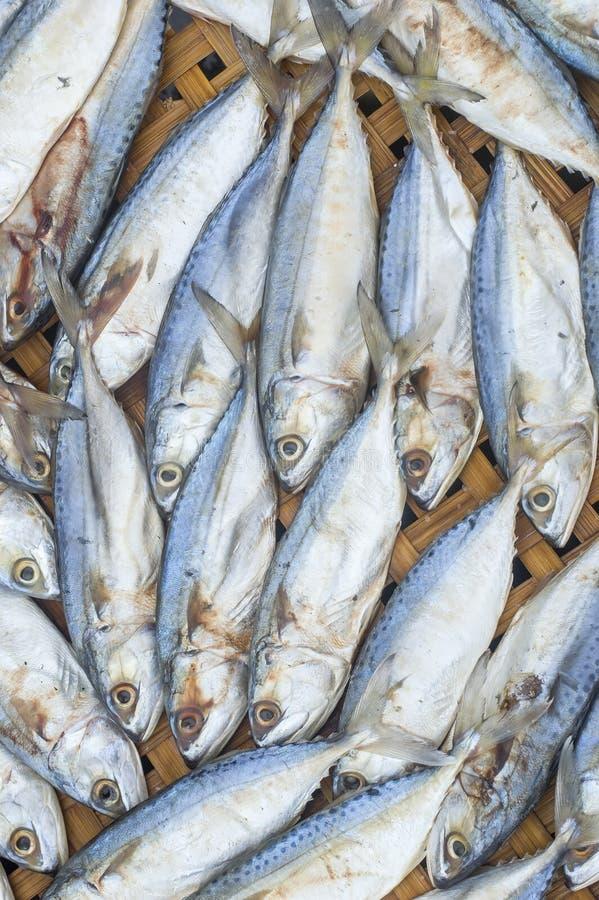 Fresh raw mackerel fish on. Bamboo Threshing basket stock photos