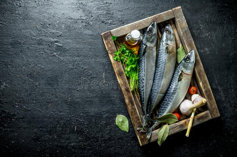 Fresh raw mackerel on a wooden tray with parsley and garlic. On black rustic background stock photography