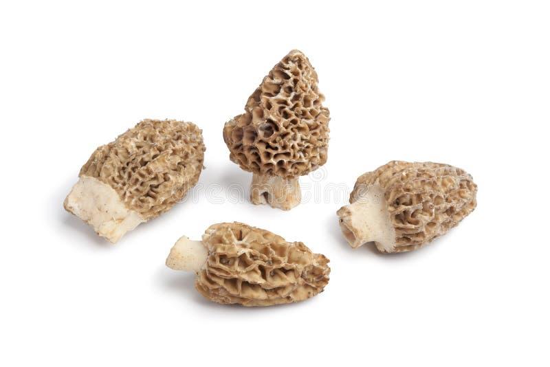 Fresh raw Morels mushrooms royalty free stock images