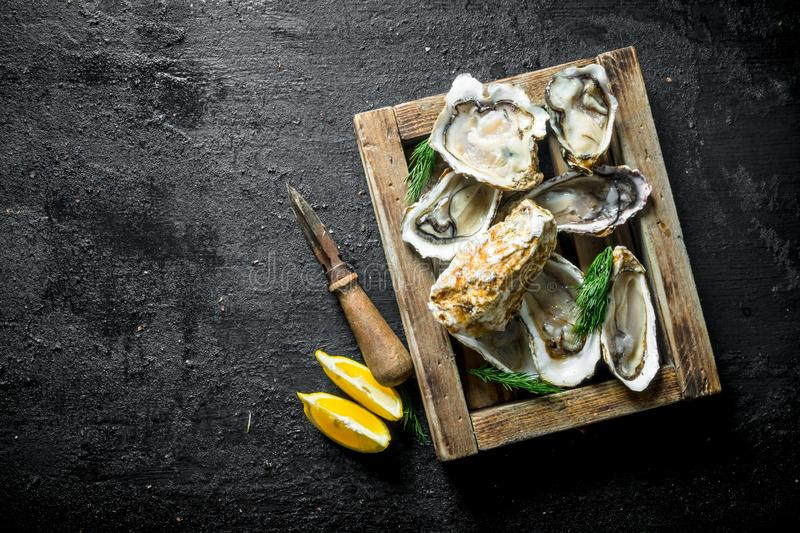 Fresh raw oysters on a wooden tray with lemon slices. On black rustic background royalty free stock images
