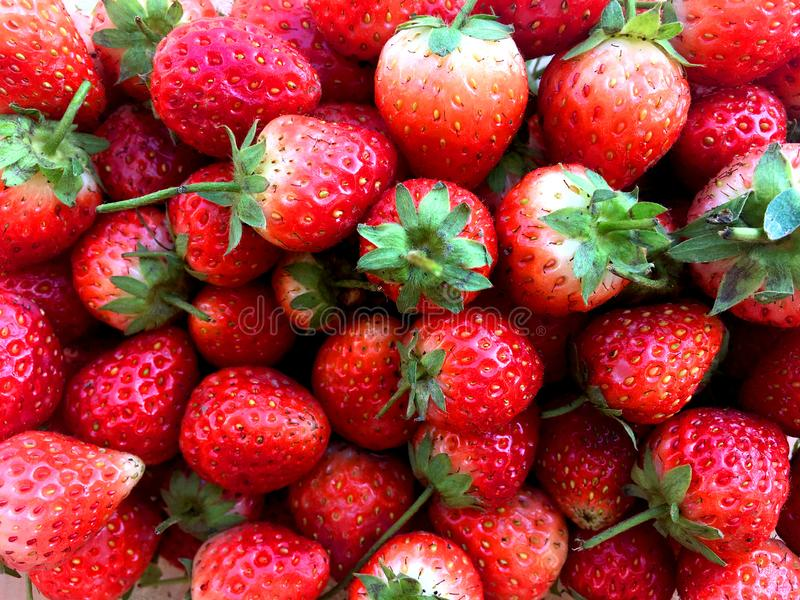 Fresh raw and ripe strawberry group. stock photography
