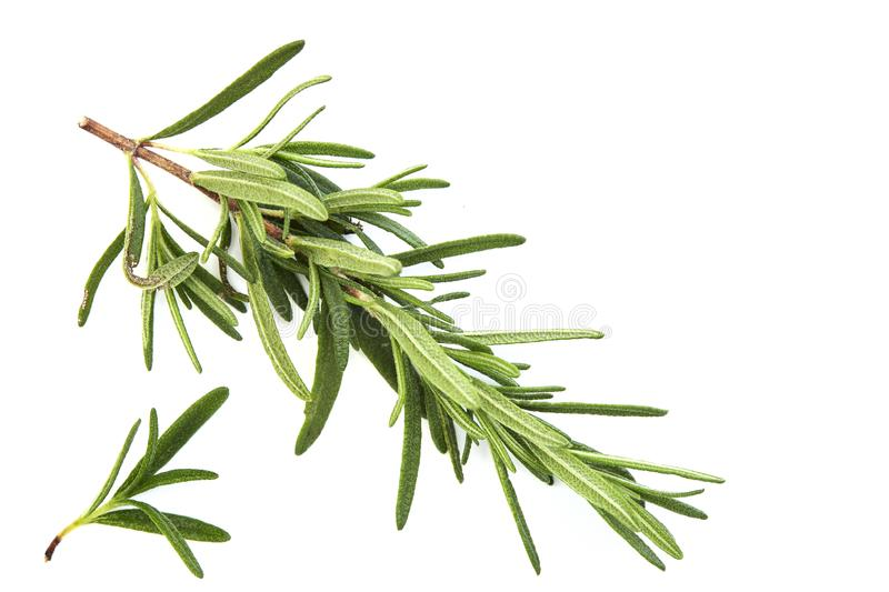 fresh raw rosemary on white background royalty free stock photography