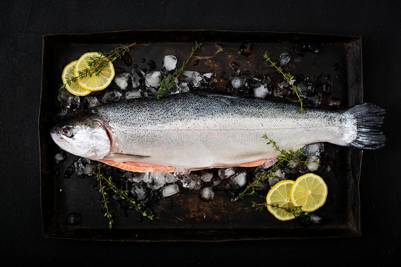 Fresh raw salmon red fish with ice on a dark background. stock image