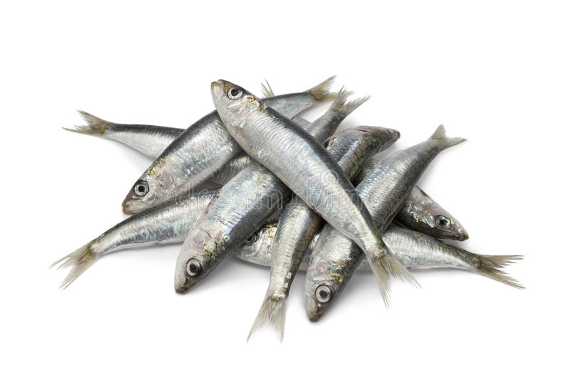 Fresh raw sardines royalty free stock images