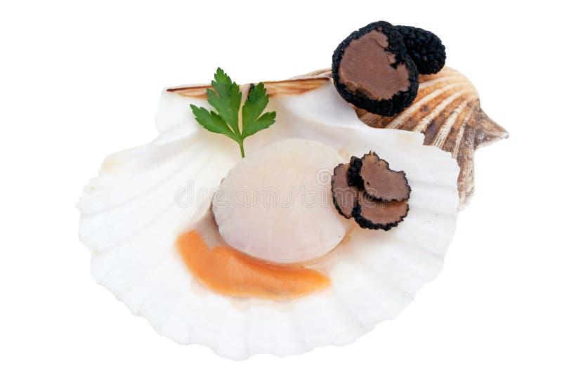 Fres raw scallop with black truffle. Fresh raw scallop and black truffle royalty free stock images