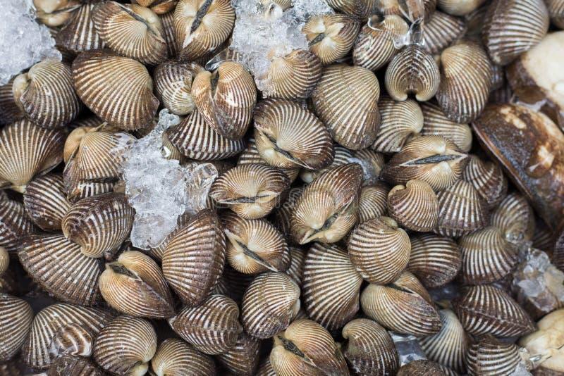 Fresh raw sea-food royalty free stock images