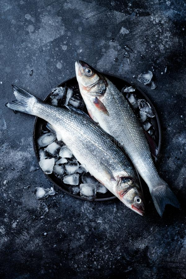 Fresh raw seabass fish on black stone background with ice. Culinary seafood background. stock photography