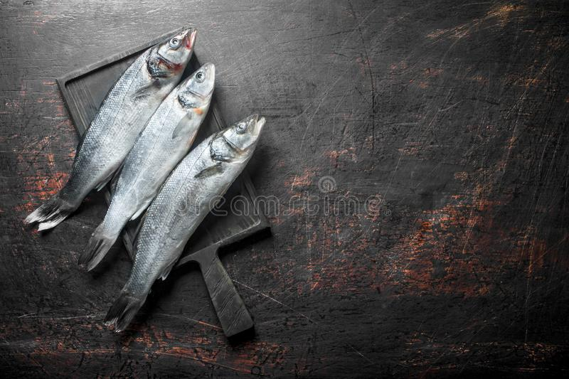Fresh raw seabass fish. On dark rustic background royalty free stock photos
