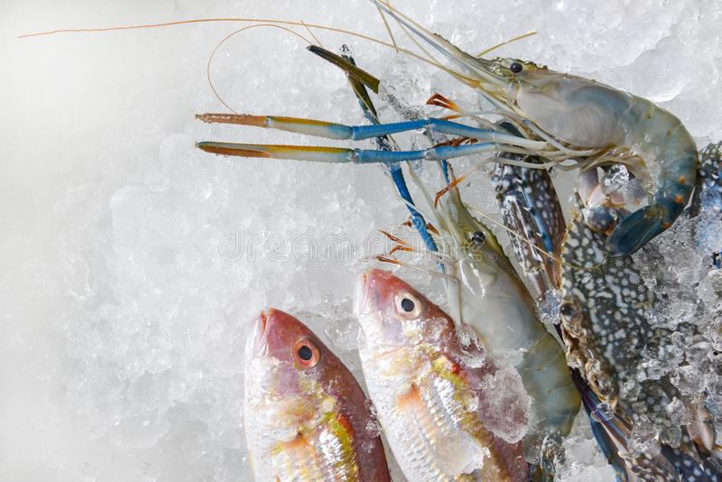 Fresh raw seafood on ice background Shellfish shrimps prawns crab and fish ocean gourmet in the Seafood market royalty free stock photography