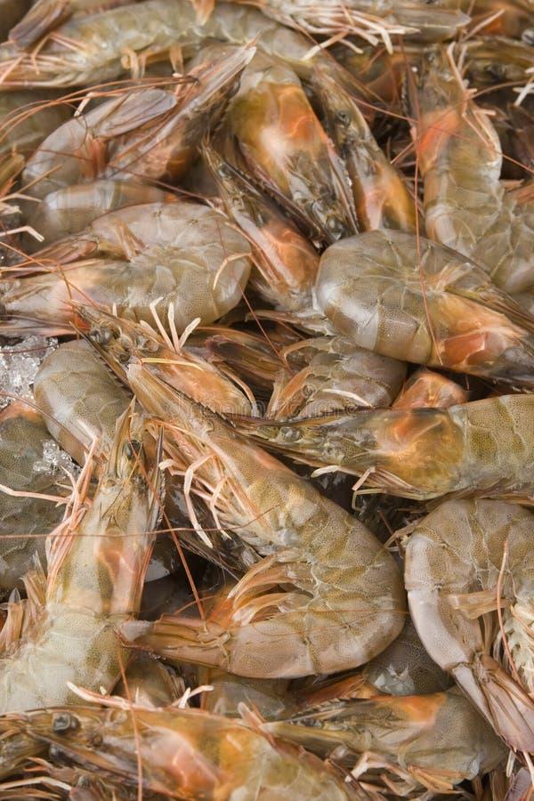 Fresh raw shrimps stock photos