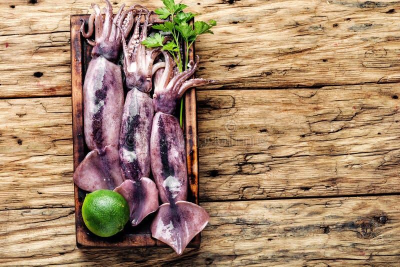 Fresh raw squid stock image