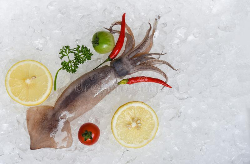 Fresh raw squid seafood lemon parsley tomato and chilli on ice bucket in the restaurant. Fresh raw squid seafood with lemon parsley tomato and chilli on ice royalty free stock photo