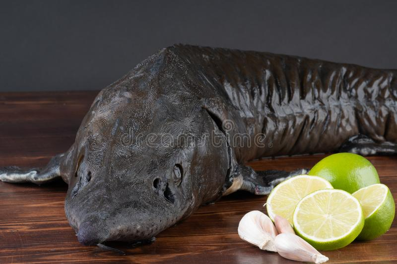 Fresh raw sturgeon fish on the table with lemon pepper garlic. clouse up royalty free stock images