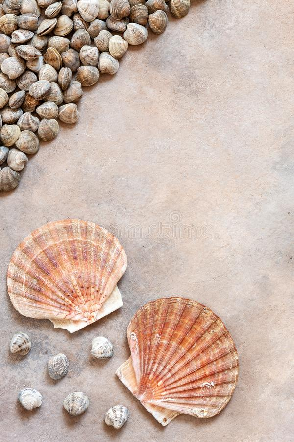 Fresh raw Surf chamelea gallina and scallop shells. Top view, close up on sand concrete background.  royalty free stock image
