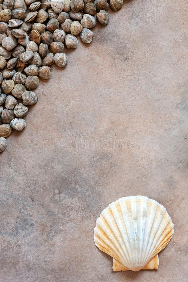 Fresh raw Surf chamelea gallina and scallop shells. Top view, close up on sand concrete background.  royalty free stock photos