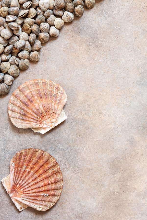 Fresh raw Surf chamelea gallina and scallop shells. Top view, close up on sand concrete background.  stock images