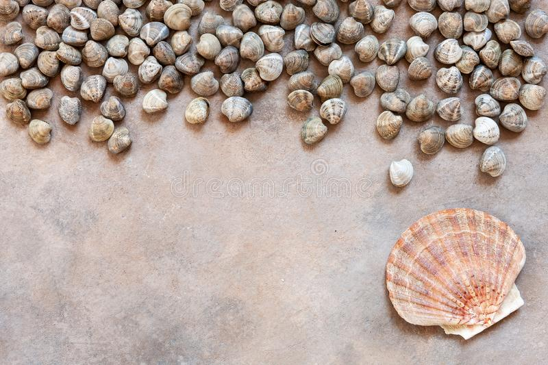Fresh raw Surf chamelea gallina and scallop. Top view, close up on sand concrete background.  royalty free stock photos