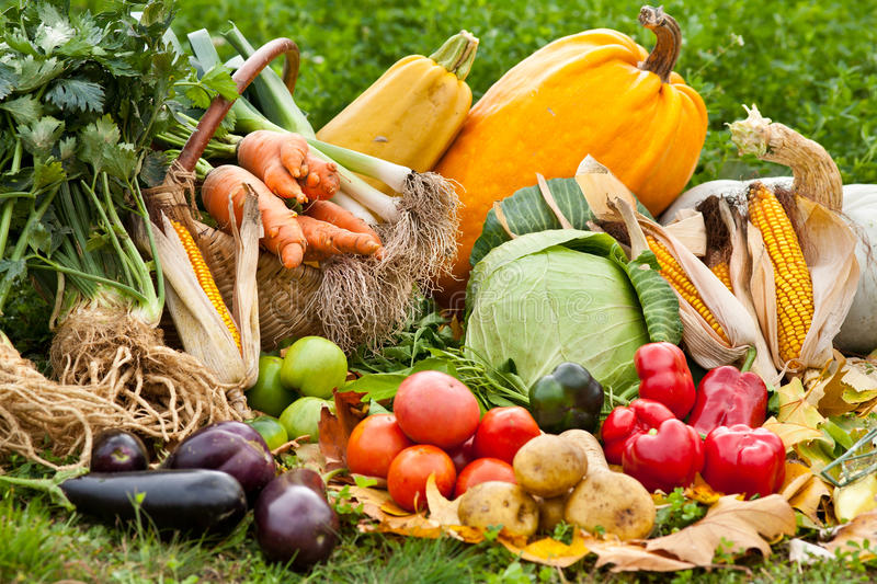 Download Fresh Raw Vegetables In Grass Stock Photo - Image: 16526632