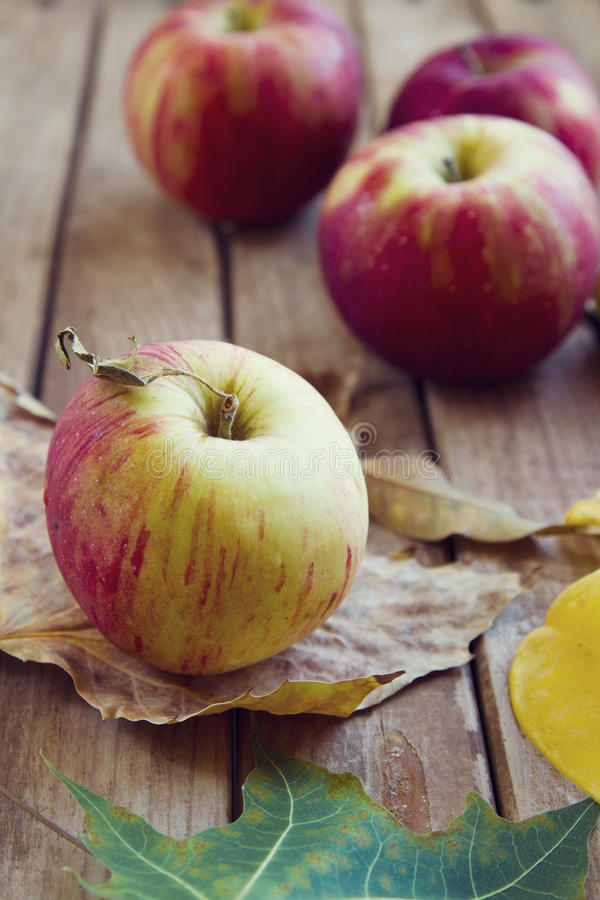 Download Fresh red apples stock photo. Image of composition, table - 27044604