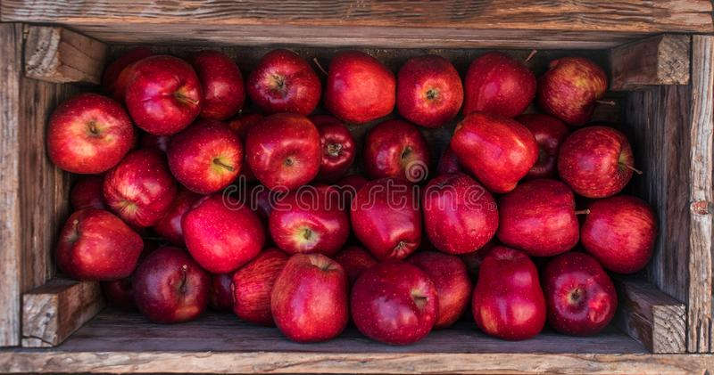 Fresh Red apples in a wooden box. Autumn harvest concept. Top v stock images