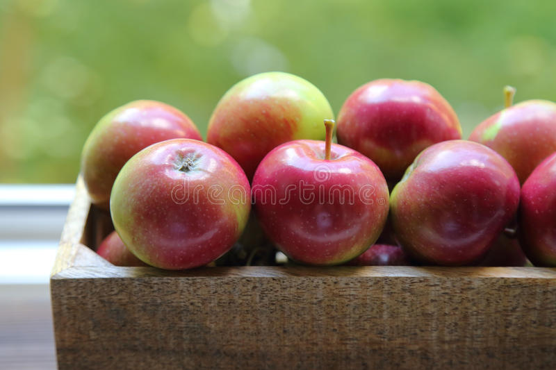 Fresh red apples in wooden box stock photo