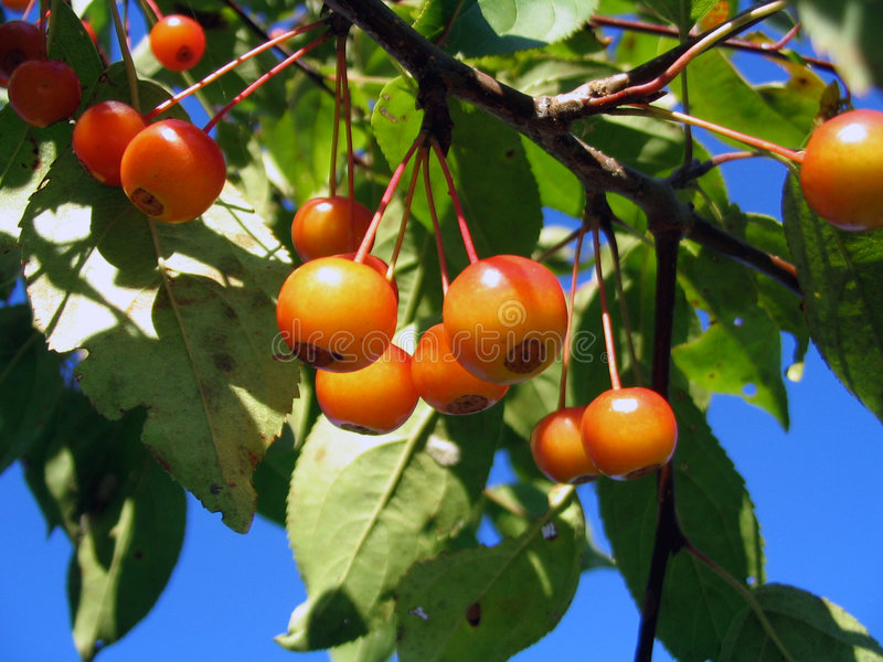 Fresh red berries royalty free stock photography
