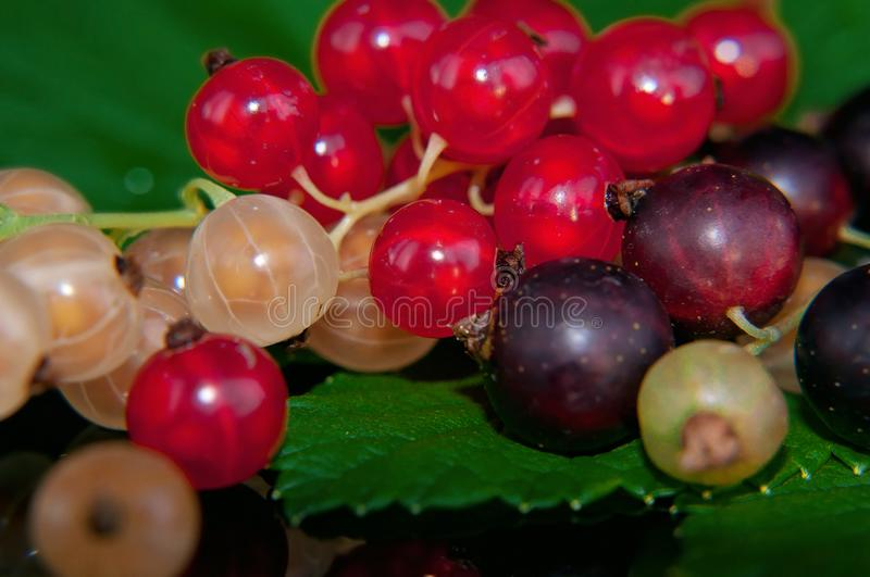 Fresh red, black and white currants with a green leaf lie on a black plate, taken macro royalty free stock photos