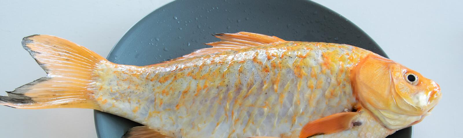 Fresh red  Carassius fish ready for cooking. Healthy eating concept, space for text royalty free stock photography