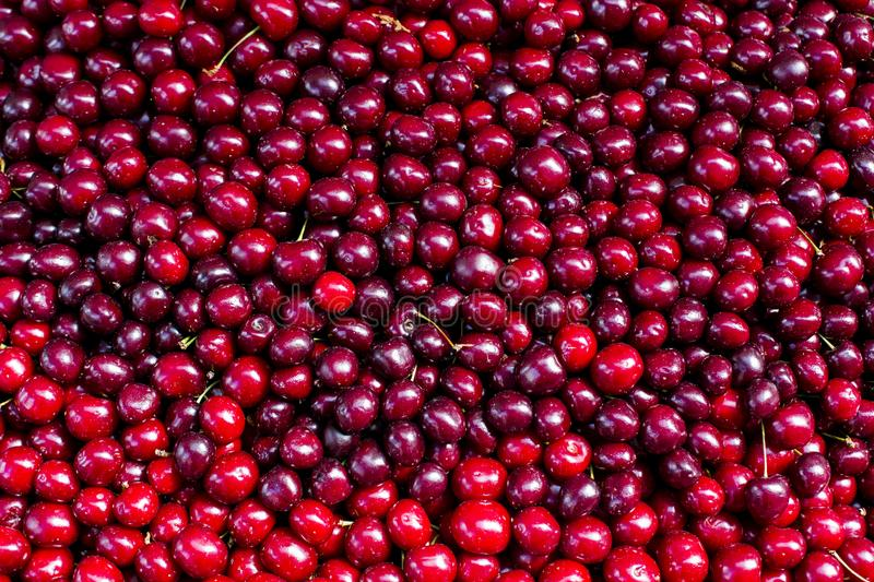 Fresh red cherry berry abstract fruit colorful pattern texture background royalty free stock image
