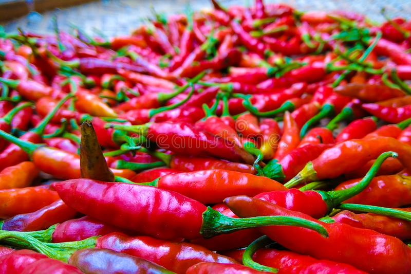 Fresh red chillies. stock images