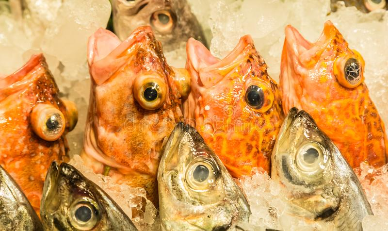 Fresh red color fish in supermarket on sale stock image