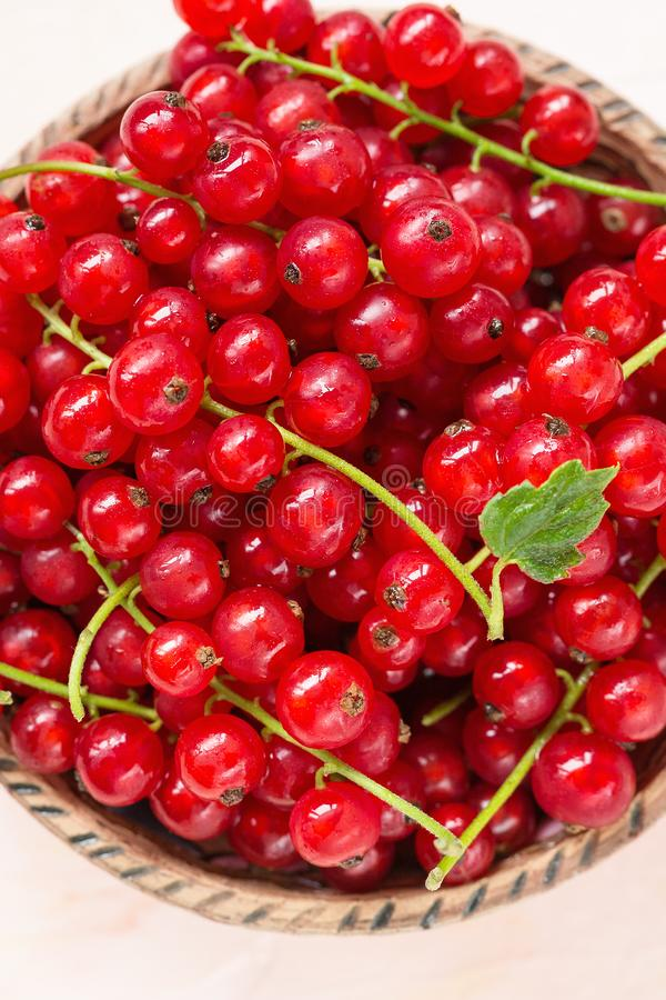 Fresh red currant berries in a bowl on a pink background royalty free stock image