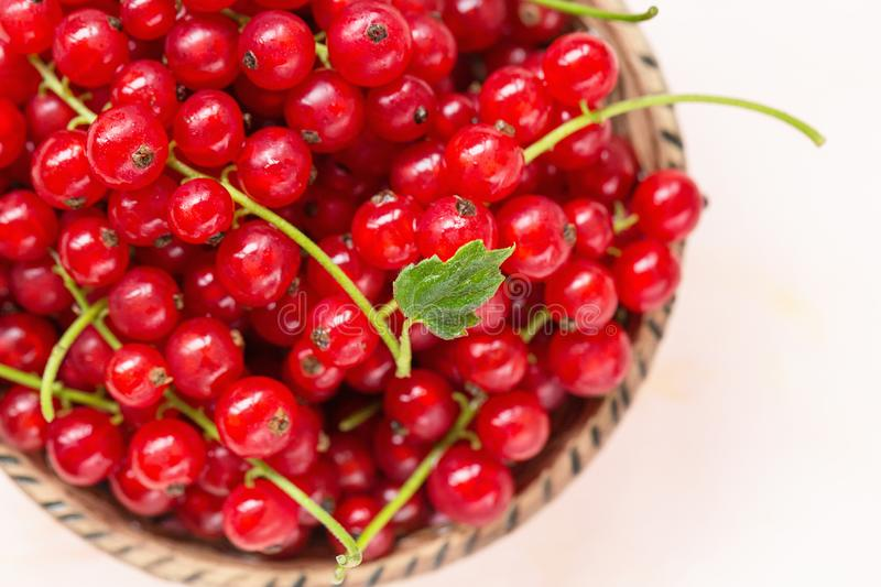 Fresh red currant berries in a bowl on a pink background. Fresh red currant berries in a bowl on a light pink background, concept of healthy eating vegan food royalty free stock image