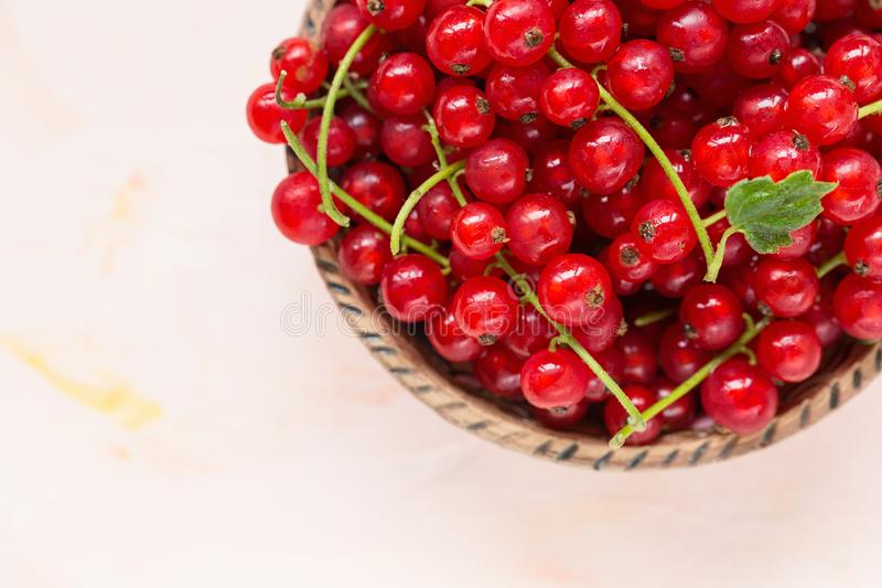 Fresh red currant berries in a bowl on a pink background. Fresh red currant berries in a bowl on a light pink background, concept of healthy eating vegan food royalty free stock images